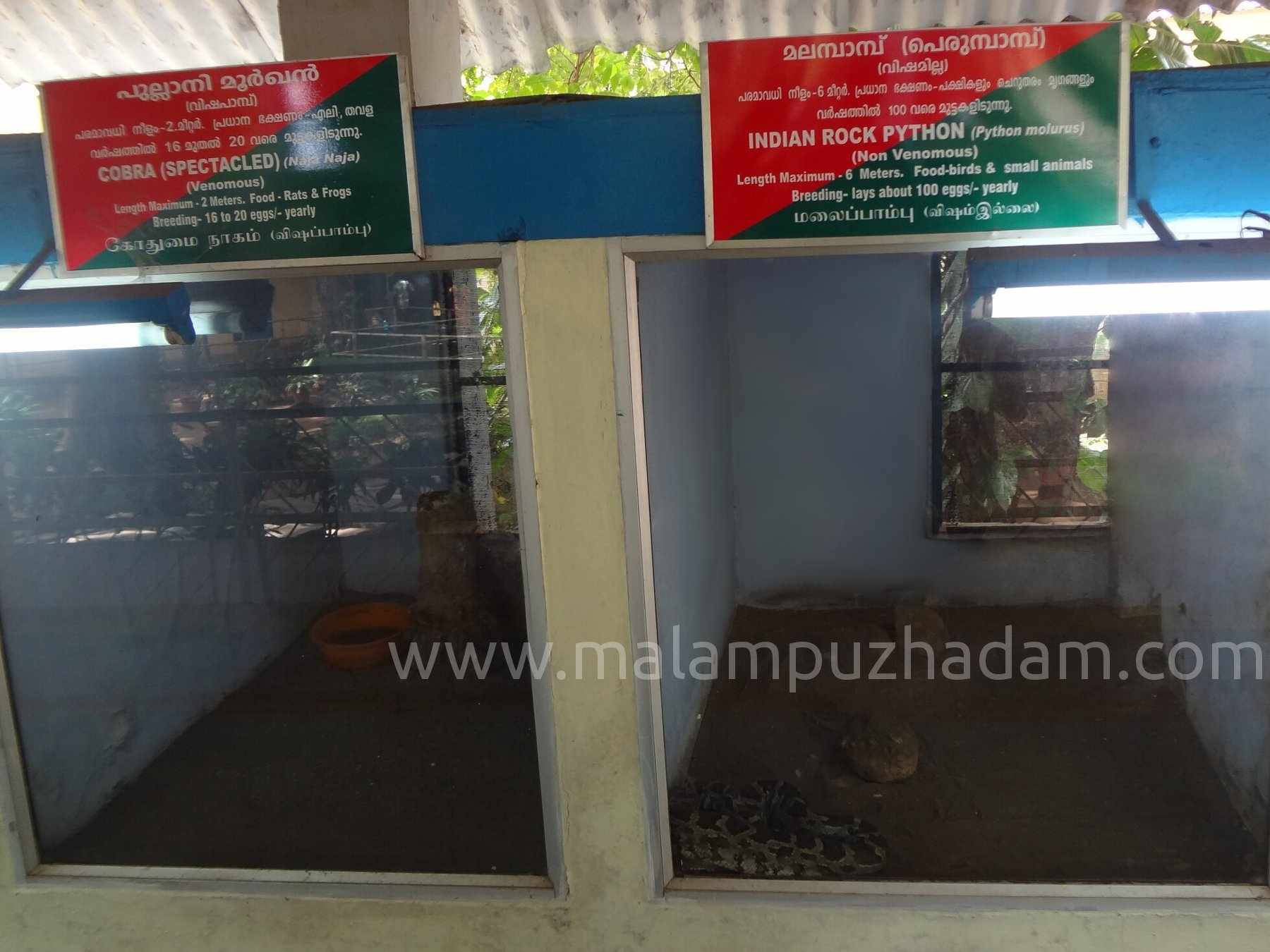 Snake Park Near Malampuzha Dam Snake Rescue And
